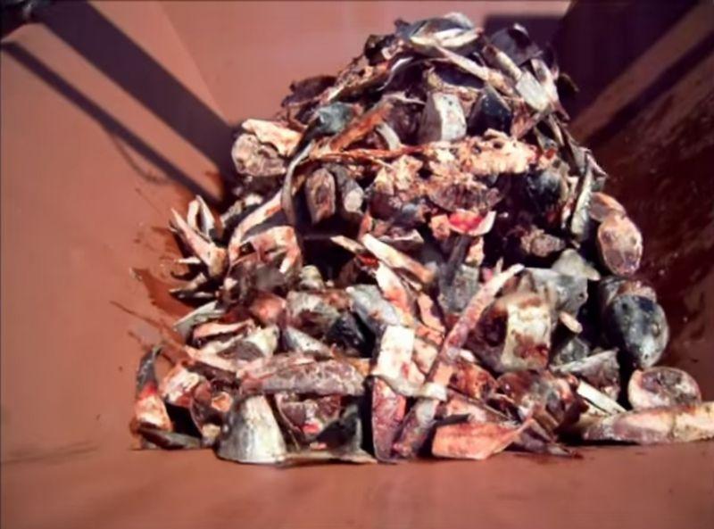【シュレッダー】冷凍マグロが粉々に!食品廃棄物を粉砕機が飲み込む