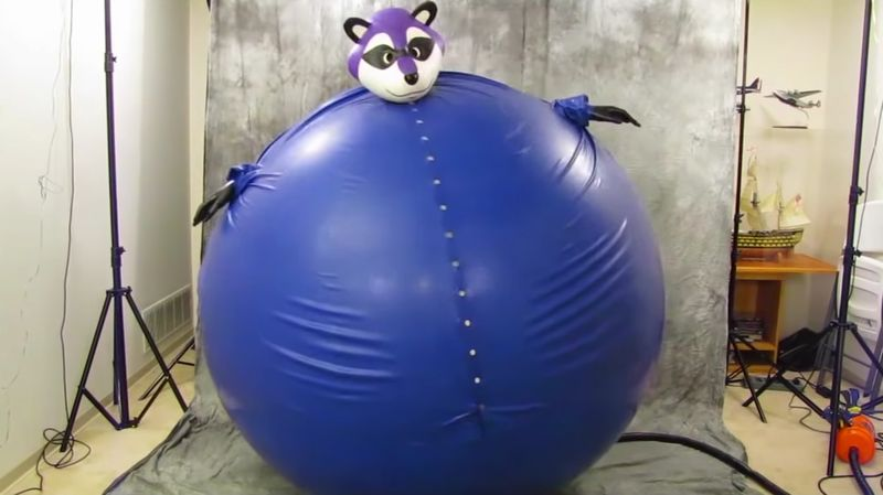【ブルーベリーインフレーション】アライグマが膨張して風船になる!