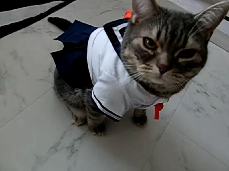 【セーラー服を着た猫】JKコスプレのネコが可愛すぎて悶死しそう…