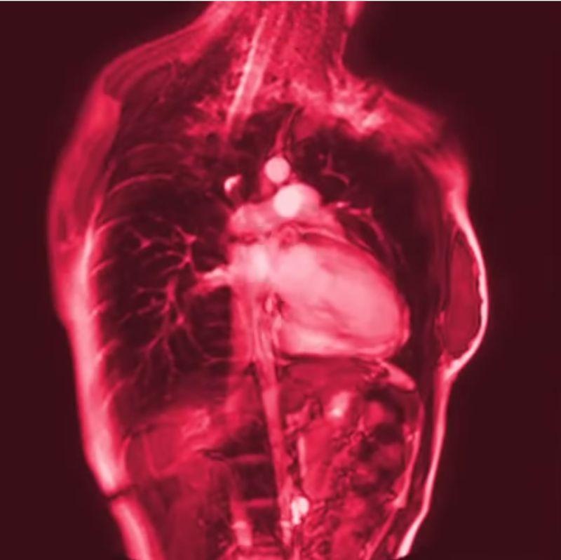 【心臓フェチ】命を支えるポンプは大忙し!鼓動と心音がドクンドクン